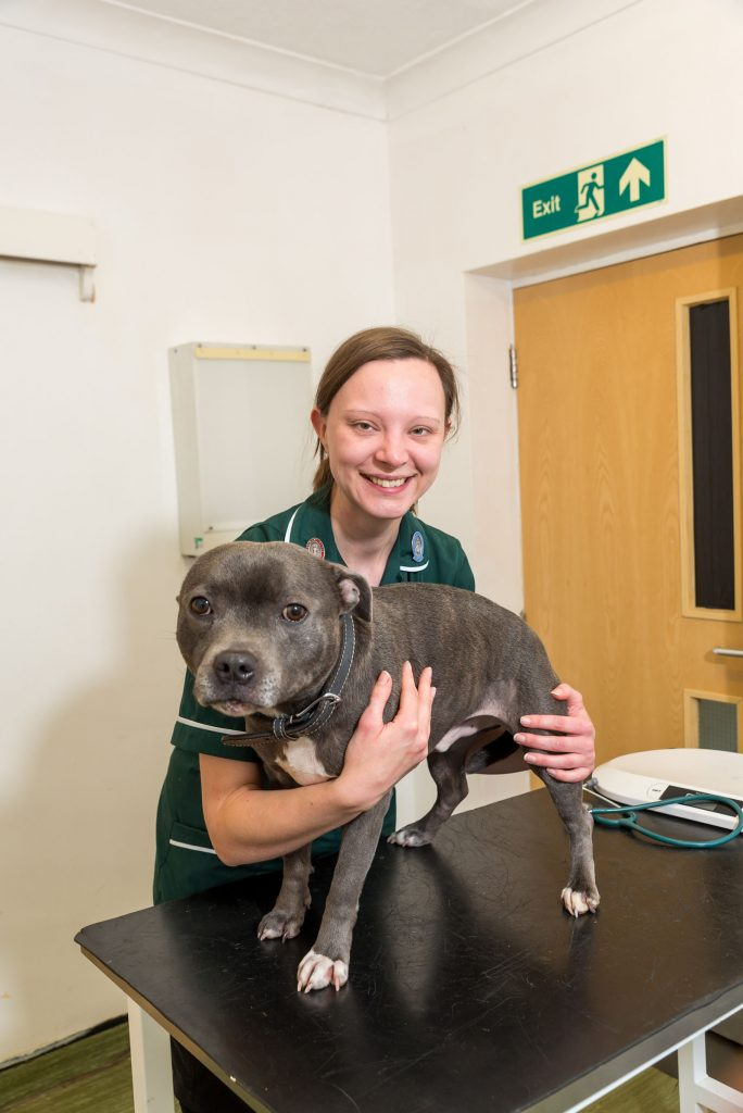 Happy Dog Stood on Table with Smiling Vet at the Side