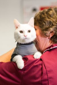 White Cat Perched on Vets Shoulder