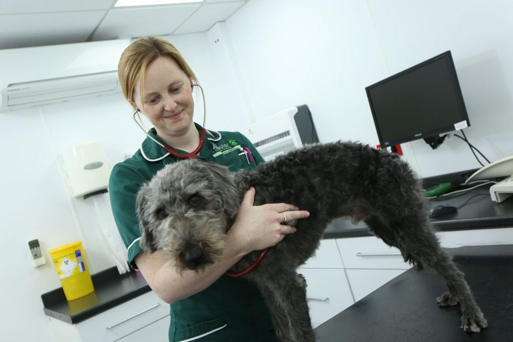 Vet Nurse Katie during consulation with dog at Minster vets