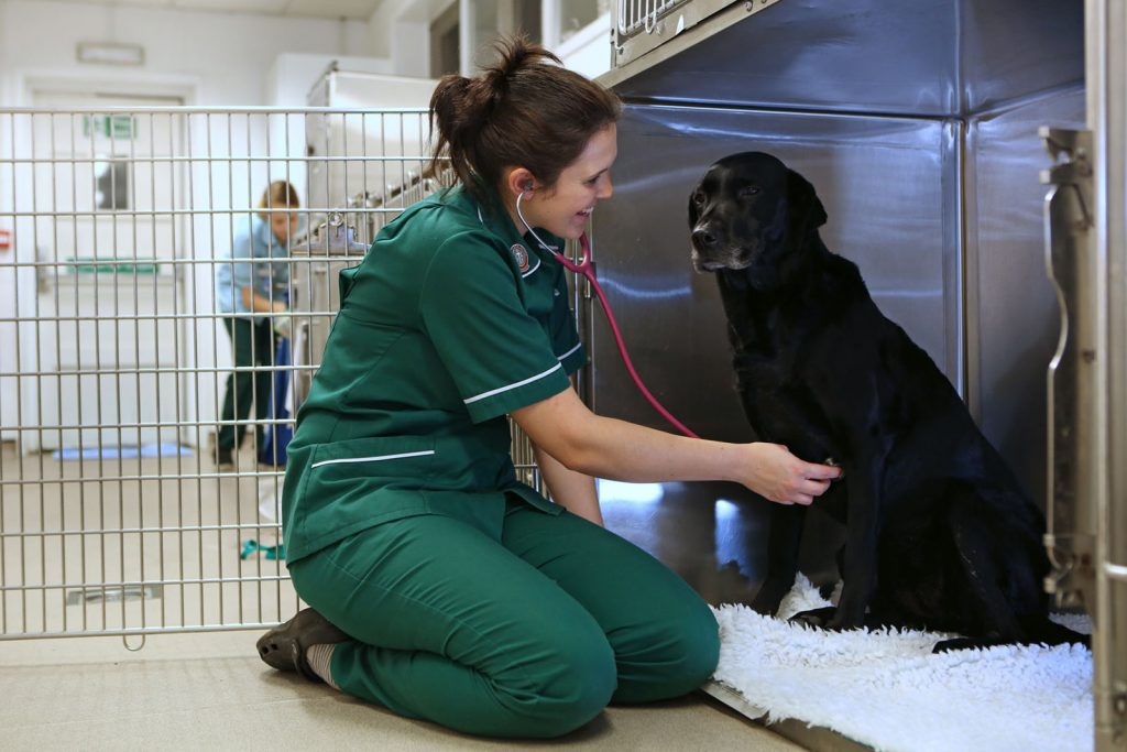Vet nurse Katie examines dog in emergency care kennels