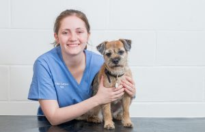 Veterinarian Kate Cottam with Border terrier dog at Border Vets